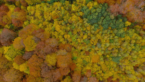 View from the height on a bright autumn forest as a background Footage