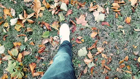 close up of white sneakers shoes man walking top view on carpet of colorful autumn GIF