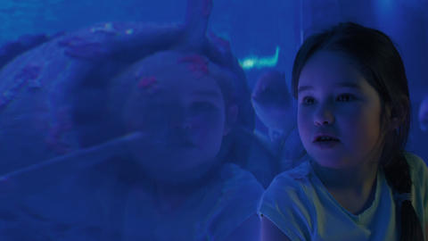 Cute girl watching fishes in a large aquarium Footage