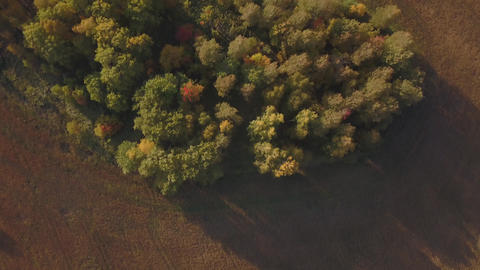 Aerial footage of golden wheat fields before harvest Footage