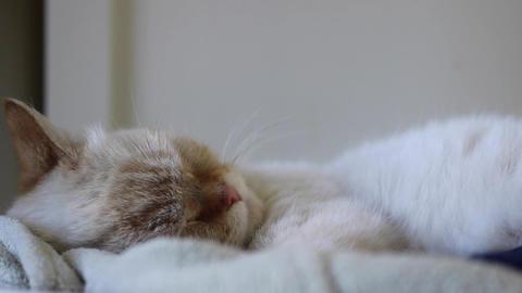 A female cat sleeps Stock Video Footage