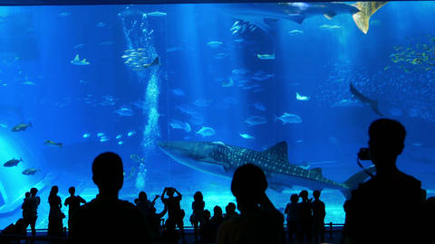 沖縄12 美ら海水族館 4K ライブ動画