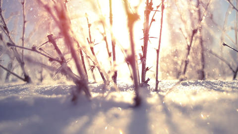 Frozen bush close-up during snowfall slowmotion Footage