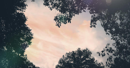 forest trees silhouette at sky sunset with sun flare rays flying through forest on nature Footage