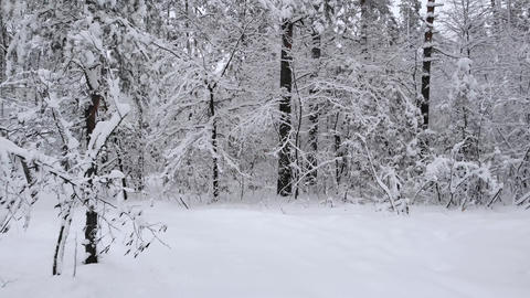 Snowy road in winter forest moving forwards Archivo