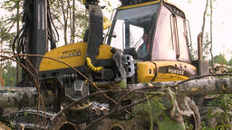 Timber cutting Felling of trees Live Action
