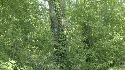 Smiling face on a tree in a forest (Parc Galame, France) d-log Live Action