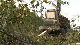 Logging Site Loading And Transportation Of Felled Trees.