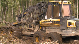 Logging site loading and transporting felled trees ビデオ