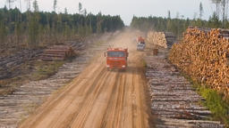 Logging Site Loading And Transportation Of Felled Trees. 0