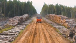Logging Site Loading And Transportation Of Felled Trees. 1