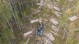 Logging Site Loading And Transportation Of Felled Trees. 2