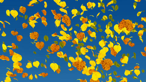 Autumn leaves slow motion close up Animation