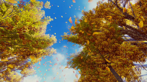Autumn leaves falling from trees in slow motion Footage