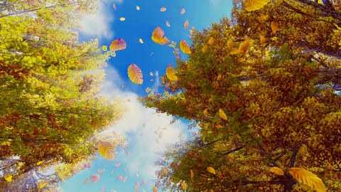 Falling autumn leaves and sunny sky Footage