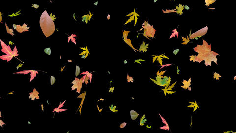 Bright, colored, autumn leaves falling in the wind. Realistic 3D render. This Footage