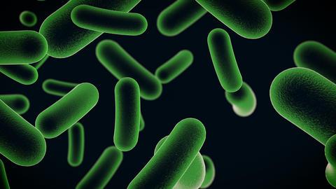 bacteria cells Animación