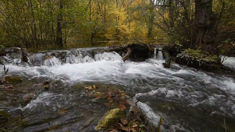 small stream in the autumn forest Footage