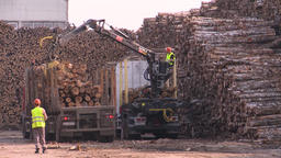 Logging site loading and transporting felled trees Live Action