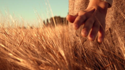 close up woman holds her hand over the golden grain Footage