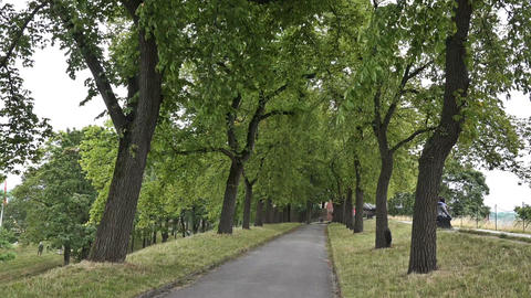 Walking path in the Royal Park, Oslo Footage