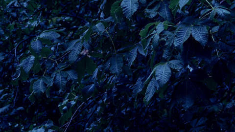 Rain and leaves of trees in the park at night Footage