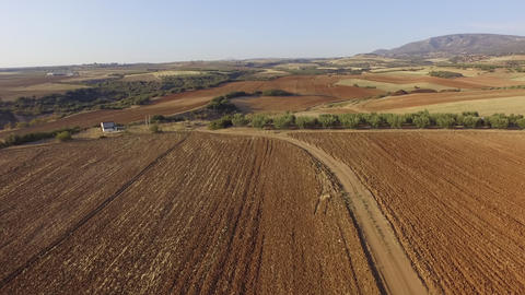 Aerial drone footage of empty fields, road between the fields and olive plantation Footage