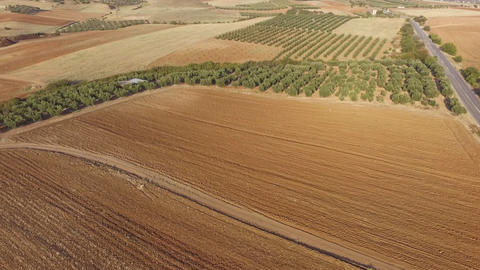 Aerial drone footage of beautiful landscape, field and nature. Drone view of empty fields and olive Live Action
