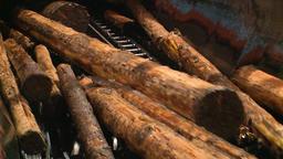 Wood Processing. Lumber. 2