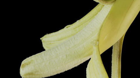 A yellow banana with an open skin hangs on a black background Footage
