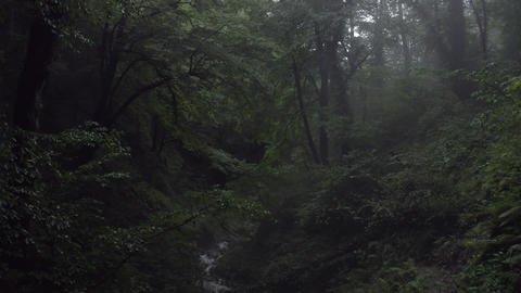 Mistery green forest and flowing river while summer rain. Drone view beautiful woodland at rainy Archivo