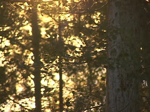 Leaves rustle in the forest Stock Video Footage