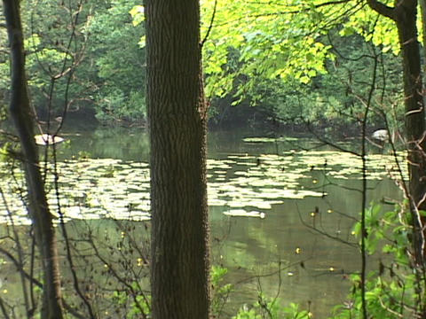 A small lake sits in a forest Stock Video Footage