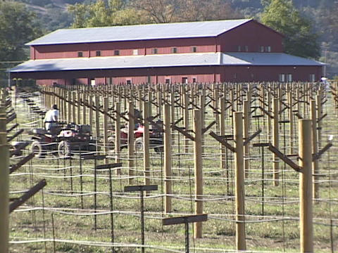 A vineyard with trellises grows in front of a large red barn Stock Video Footage