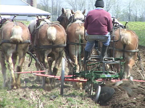 A six horse team plows a field Footage