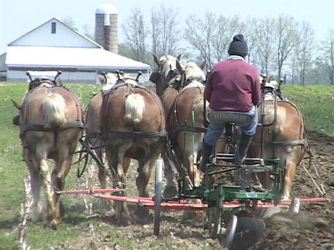 A six horse team plows a field Stock Video Footage