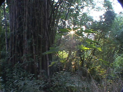 Sunlight filters through the trees of a rainforest Stock Video Footage
