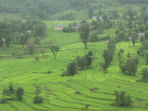 Rice paddies grow on terraces in India Live Action