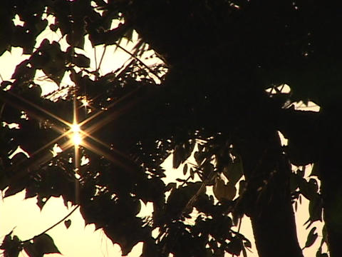 Sunlight shines through the trees of a forest Stock Video Footage