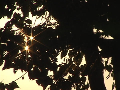 Sunlight shines through the trees of a forest Footage