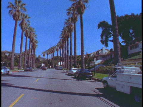 Palm trees line a street in Beverly Hills Stock Video Footage