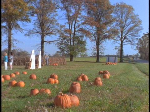 Pumpkins adorn a shack in a pumpkin patch Stock Video Footage