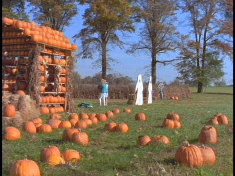 Pumpkins adorn a shack in a pumpkin patch Stock Video Footage