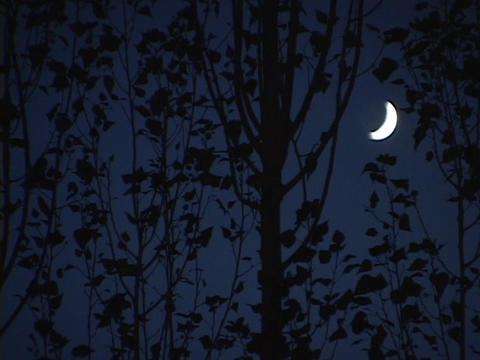 A crescent moon shines behind a grove of trees Footage