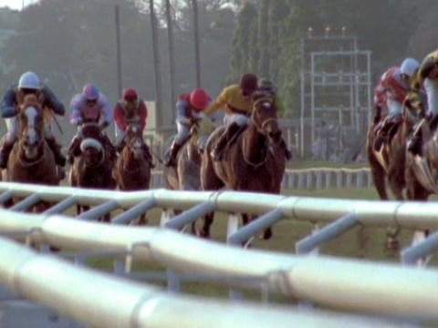 Horses in a race run down the final stretch Footage