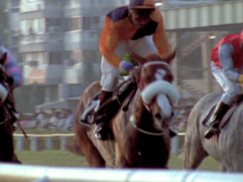 Horses in a race run down the final stretch Stock Video Footage