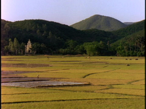 Lush green hills stand in the distance beyond rice paddies Footage