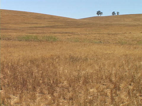Grass grows in a field in central California Stock Video Footage