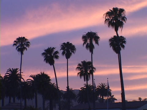 Palm trees stand against a blue and pink sky Stock Video Footage