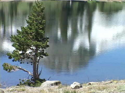 A lone tree stands beside a mountain lake in the Sierra Nevada Mountains of California Footage